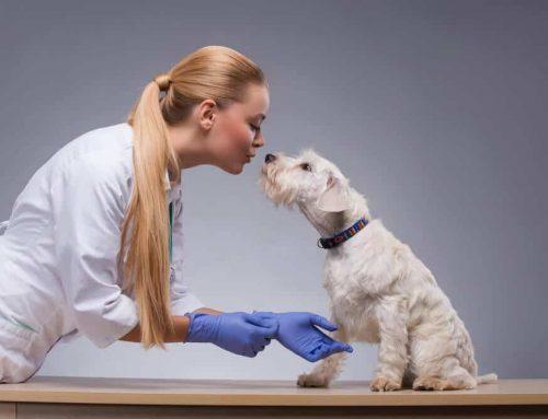 Βοηθός Κτηνιατρικής Κλινικής