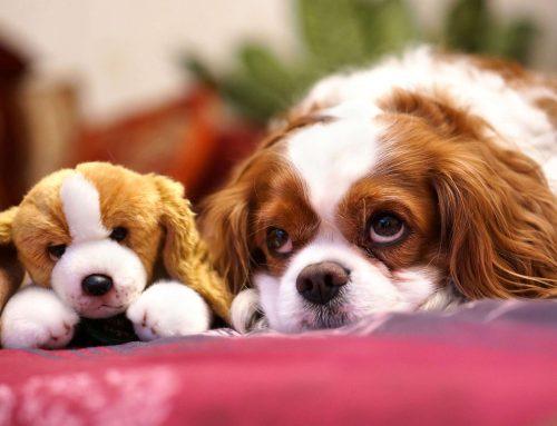 Φροντίδα ζώων